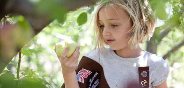 Girl Scout Brownie apple picking